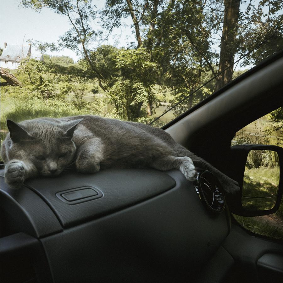 Chat des 4 vandrouilleurs